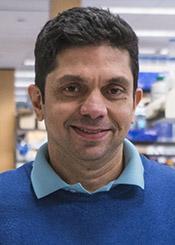 Raj Awatramani